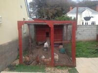 Hand crafted chicken coup and 7 chickens.