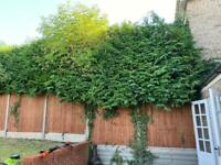 Gardening and DIY services