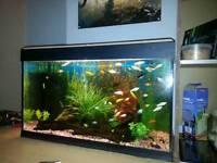2ft 6 jewel fishtank with fish etc