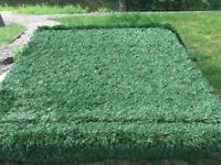 Artificial grass, unopened in delivery wrapping