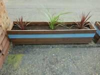 Planters Inc soil and plants