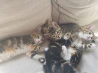 Cute kitties for sale!!!!!