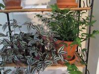 PLANTS ~ CACTI ~ CACTUS ~ SUCCULENTS ~ £10 EACH
