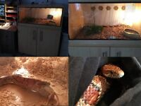 Corn snake and Vivarium (Complete with Water bowl, Hide, branches, Heat Mat, Lighting and Tongs)