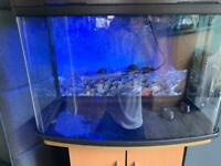 Immaculate condition 64ltr fish tank/ aquarium and stand