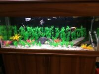 **LARGE TROPICAL FISH TANK AND CABINET**