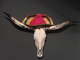 Texas Longhorn skull with horns