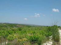 Land for sale in heart of Cyprus wine region, sea views & 15 mins to beach in Paphos