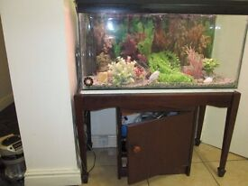 large fish aquarium & Stand + all accessories all in good order