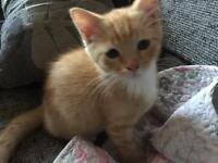 I'm sorry all the kittens are gone now. 3 gorgeous male kittens ready now