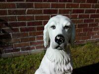 Lovely ornamental dog