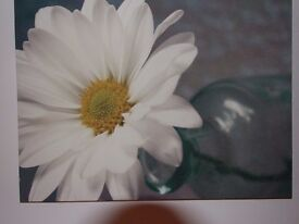 Canvas of Daisy in jar