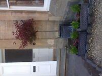 3 patio plant pots
