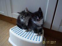 Five sweet kittiens