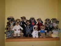 13 Meerkats