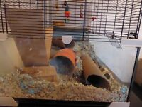 Gerbilarium and 4 male gerbils