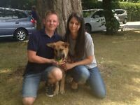 Professional Dog Walking £12 ph. Fully Insured and Police Checked. SE18, SE7, SE10, SE3