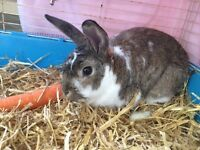 Free boy rabbit needs his forever home