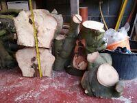 Five huge pieces of Holm Oak for woodturning blanks