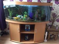Juwel vision 450 litre 5foot fish tank