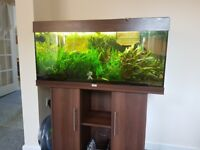 Juwel Rio 180 Aquarium full set up
