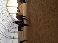 Pony rides and riding lessons