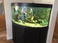 Black Juwel trigon 350 litre corner tank