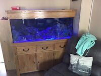 5ft solid oak fishtank with sump comes with skimmer (£300) light and pump