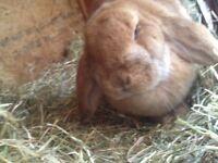 Rabbit and hutch.