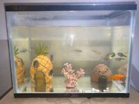 10 LITRE FISH TANK