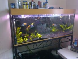 Full aquarium set up - 240l Juwel Rio, stand, and external filter - £180