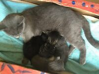 4 Beautiful Kittens