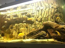 560 litre fish tank aquarium