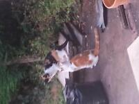 2 beautiful lovely cats looking for a home one male named treasure and one female named tiger.