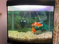 Home aquarium with fish, pumps and lights in good condition