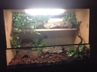 Reptiles, vivariums or equipment