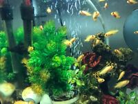 Malawi cichlid fishes sale from £1-£2 only