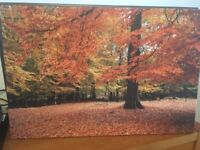 large autumn picture on canvas in excellent condition