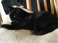 Lovely 2 cats rehome