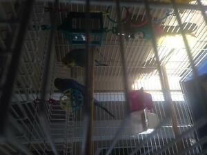 2 birds and cage