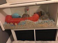 Hamster cage custom made