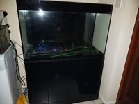 Aquael 215 litre fish tank