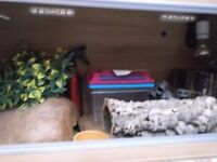 "reptile tank with sliding glass doors 34""x15"" & all acesorries £42.00"