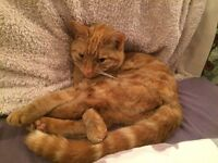 Missing Cat from Ophir Road, Worthing