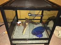 Reptile glass enclosure
