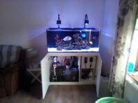 marine fish tank full set up red sea reefer 350