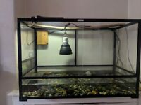 2 musk turtles with tank and equipment