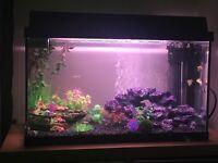 60 Litre Juwel Fish Tank
