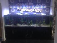 8ft fishtank