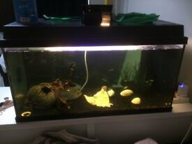 Tropical fish with tank, auto feeder, 6 fish and all cleaning equipment